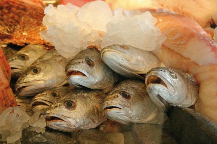 naschmarkt fische