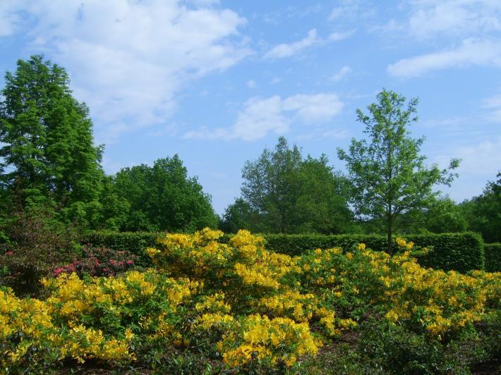 Bremen_Rhododendronpark.jpg