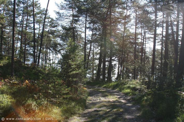 Tirol_Landschaftsimpressionen2.jpg