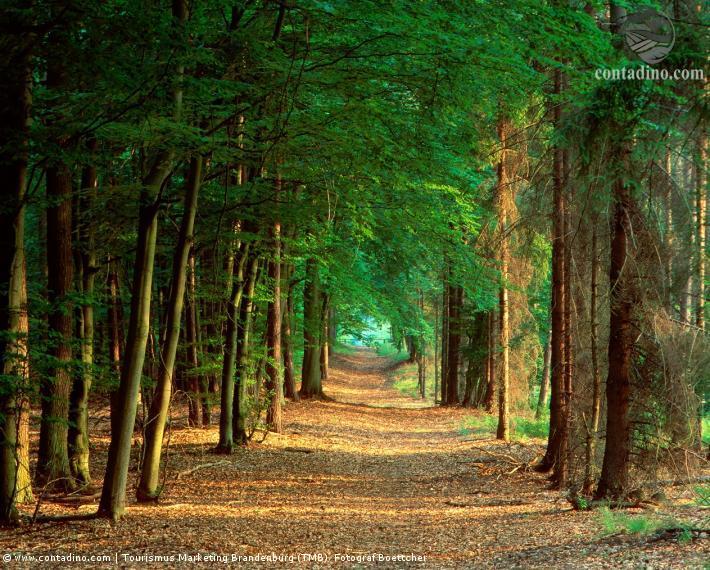 Brandenburg_Rheinsberg (Nähe) Waldwanderweg.jpg