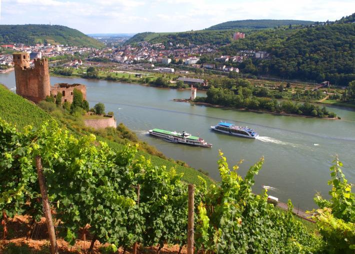 Oestrich-Winkel: Schloss Vollrads, Weinanbaugebiet Rheingau