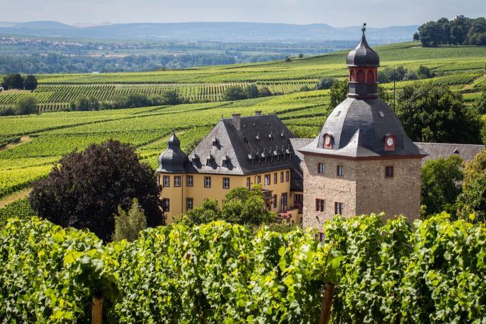 Schloss Vollrads, Wein-Anbaugebiet Rheingau