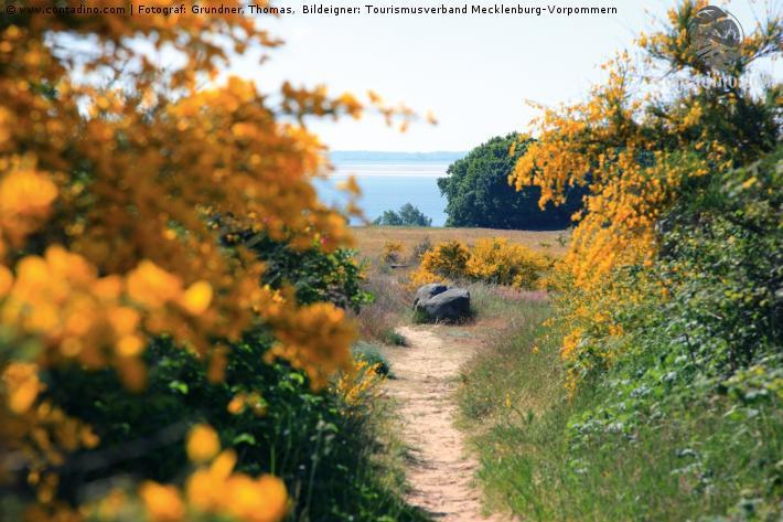 Mecklenburg_Wanderweg auf der Insel Hiddensee, Insel Rügen.jpg