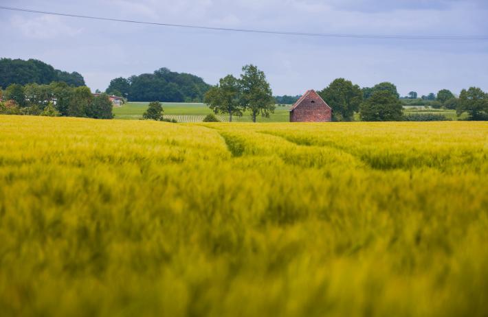 NRW_Saftige Felder im Münsterland.jpg