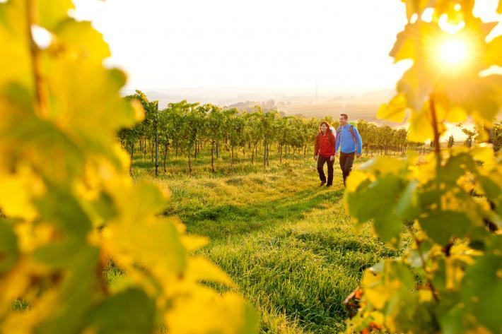 Rheinland_Wanderer auf dem Pfälzer Weinsteig.jpg