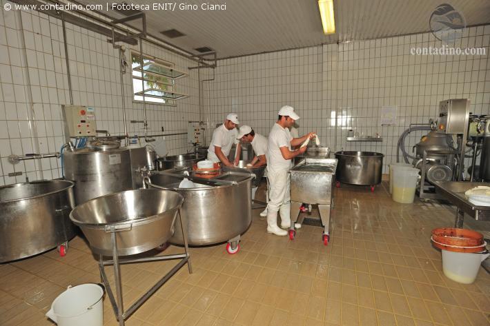 Herstellung von Büffel-Mozzarella