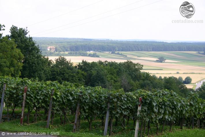Burgenand_Impressionen Uhudler Heiligenkreuz  (5).JPG