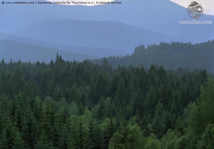 Bayern_Bayerischer Wald.jpg