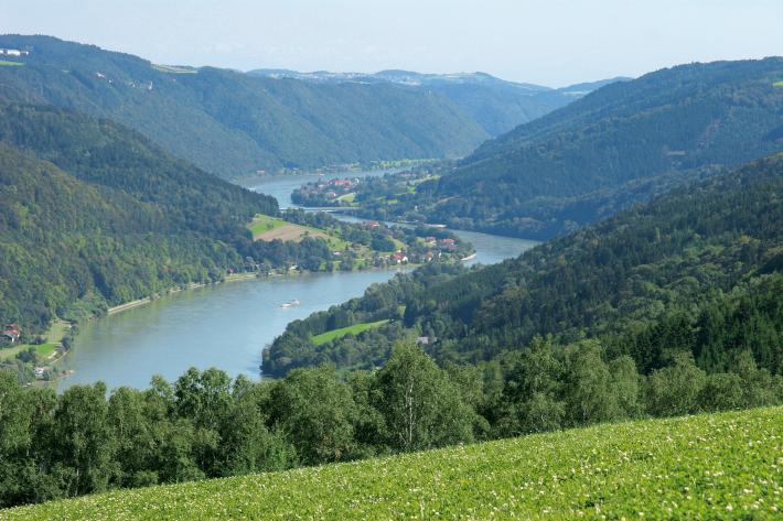 Donauschlinge Sauwald
