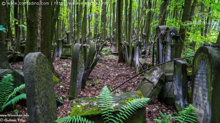 Masowi_Warschau und jüdischer Friedhof.jpg