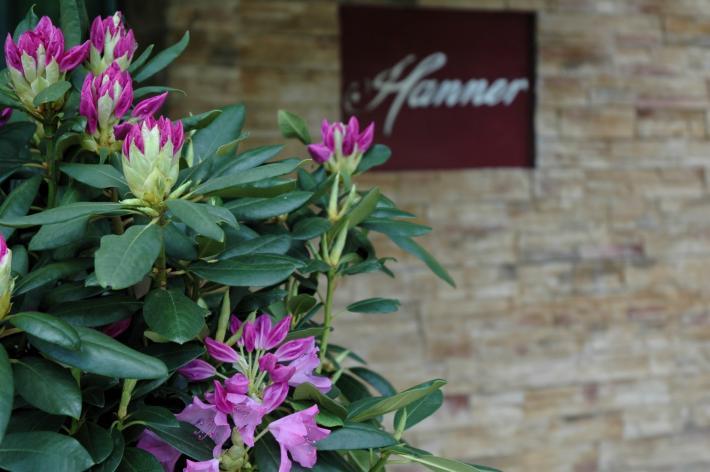 Hanner Logo.JPG