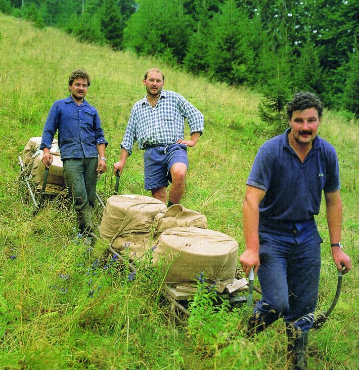 Käse mit Schlitten ins Tal fahren
