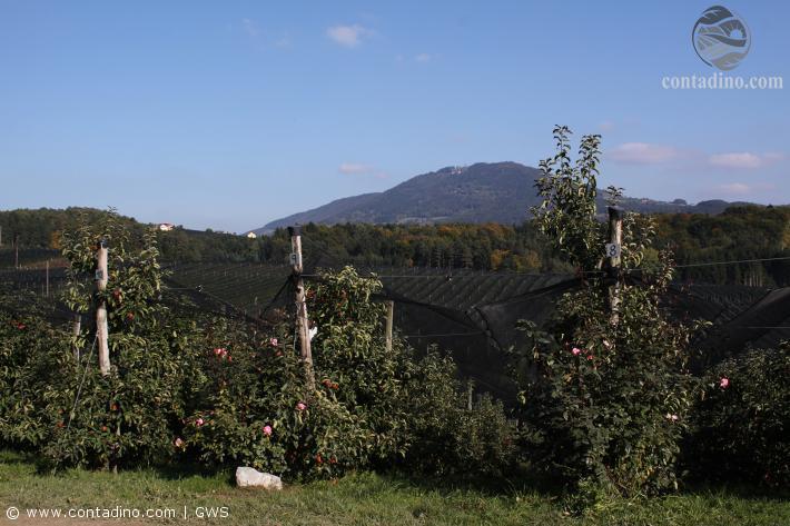Obstbau Zöhrer