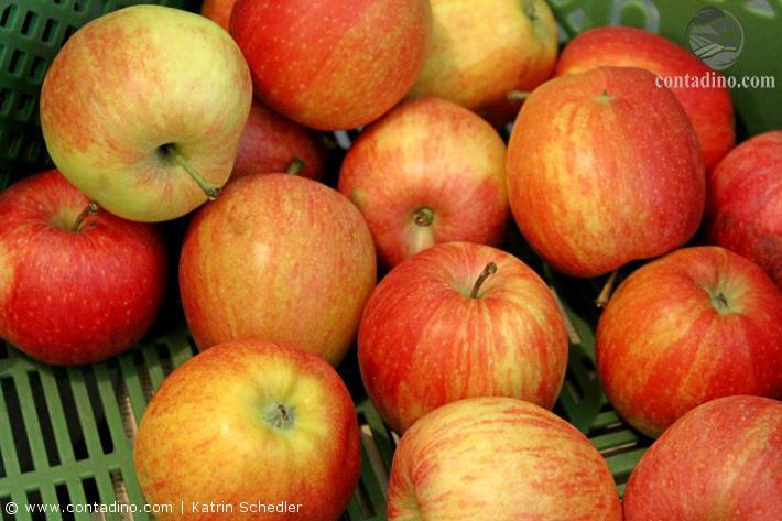 Pankrazhofer Äpfel