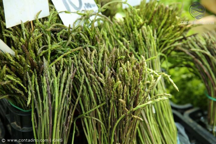 Istrischer Wildspargel (Markt Pula)