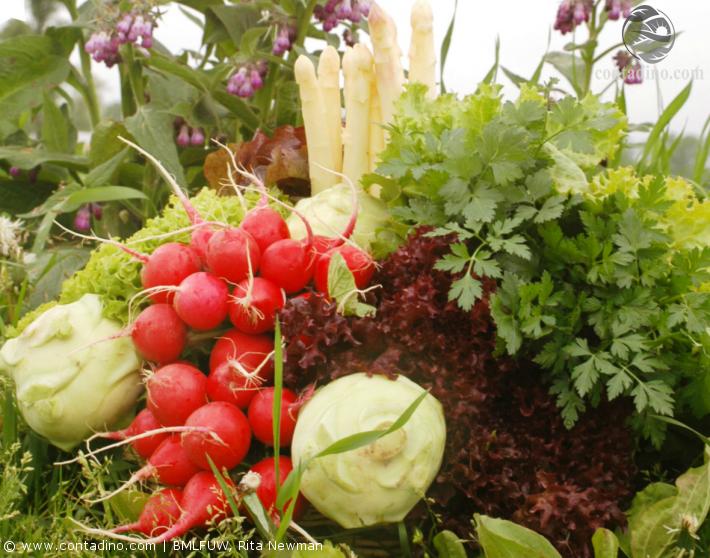 Eferdinger Landl Gemüse