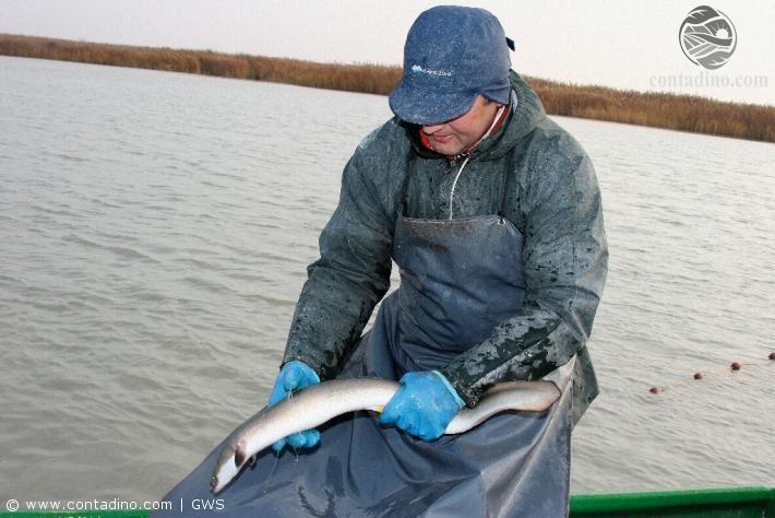 Fischer am Neusiedlersee mit Aal