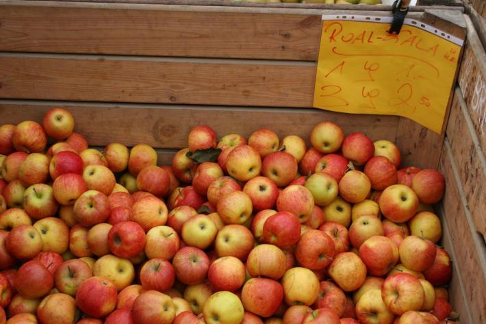 Steiermark_Äpfel