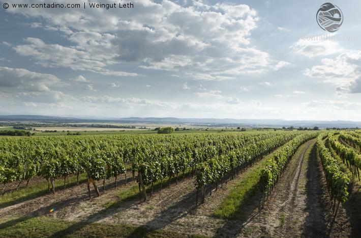 Wagram Weingärten