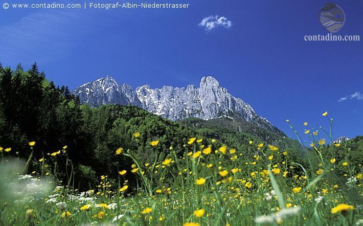 KAM_000177_Blumenwiese-vor-dem-Wilden-Kaiser_Fotograf-Albin-Niederstrasser.JPG