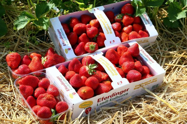 Eferdinger Landl-Erdbeeren