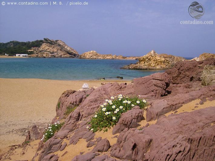 Menorca_Blühendes am Strand.jpg