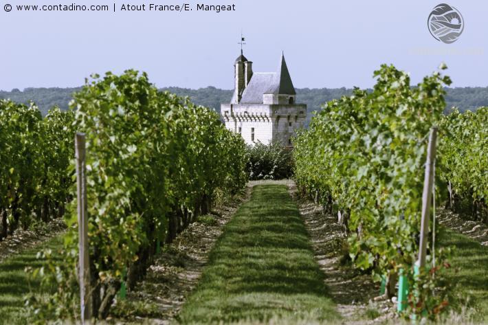 Vignoble de Chinon CRT Centre-Val de Loire - E. Mangeat.jpg