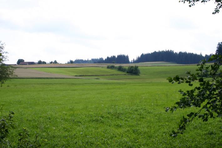 Waldviertel_IMG_4536.jpg