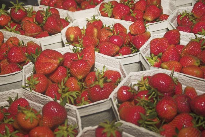 Marchfeld Erdbeeren