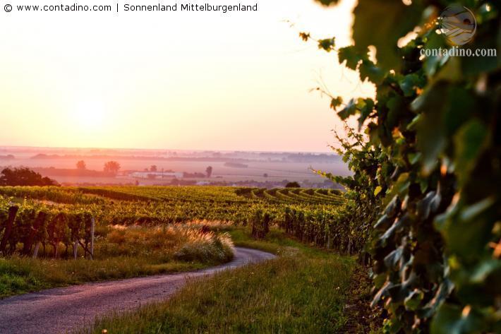 LMittelburgenlandand7_c_Sonnenland_Mittelburgenland.jpg