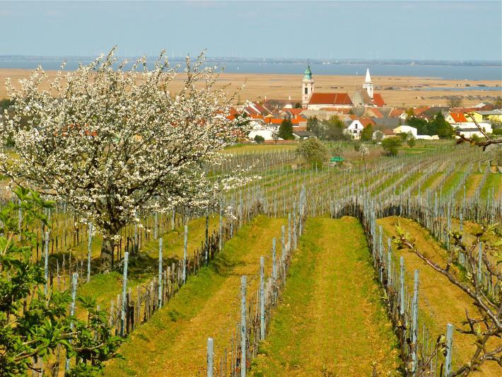 Weingärten Rust
