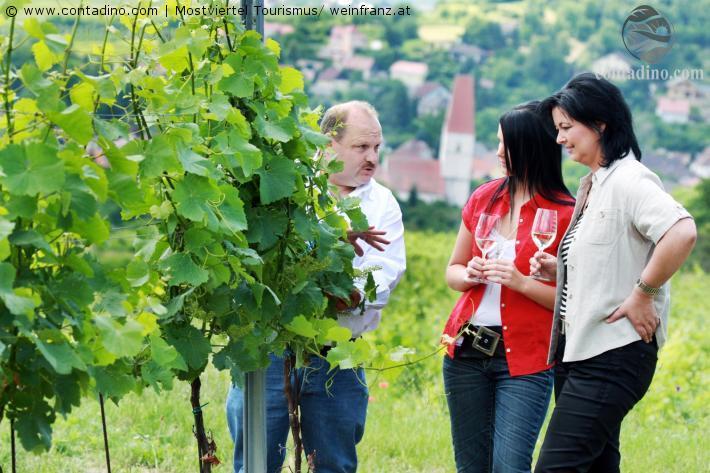 Mostviertel_Weinverkostung im Traisental.jpg