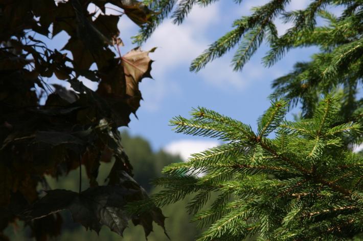 Steiermark_Mariazell