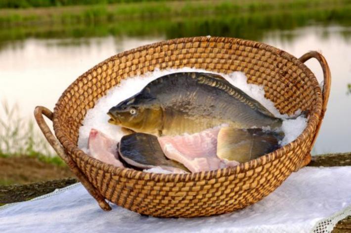 Steirisches Teichland-Karpfen
