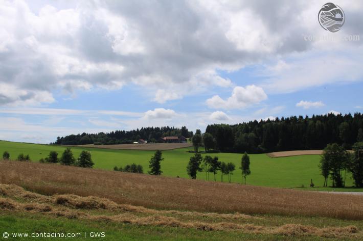 Sauwald