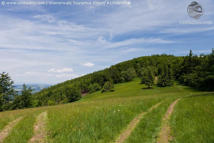 Wienerwald_Blick vom Schöpfl_Wienerwald Tourismus GmbH_A.Lindenthal.jpg