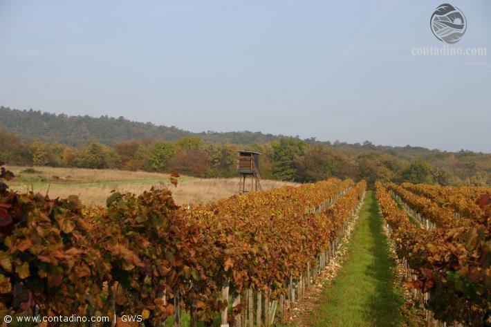 Burgenand_Das Leithagebirge im Herbst (3).jpg