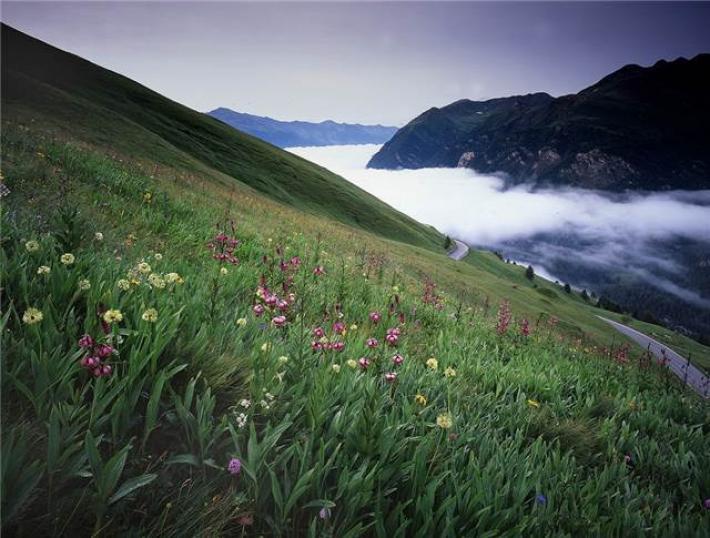 Großglockner Blumenwiese