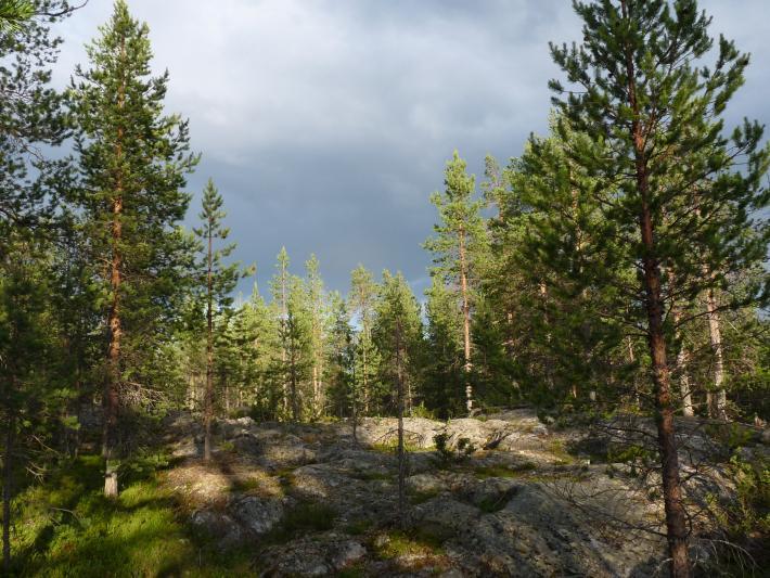 Finnland (6).jpg