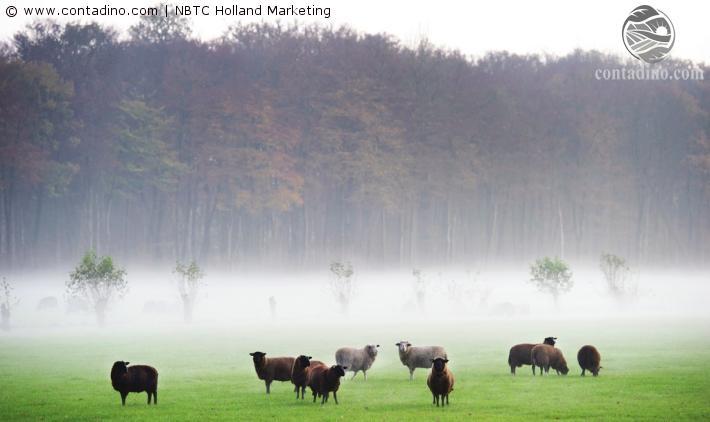 Niederlande_De Hoge Veluwe.jpg