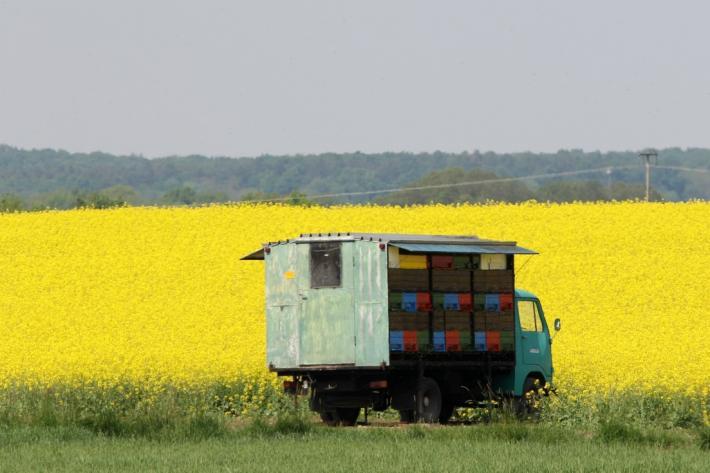 Slowenien_Beekeper`s vehicle in the field.jpg