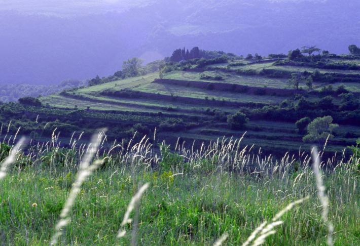 Slowenien_Fields of Portoroz.JPG