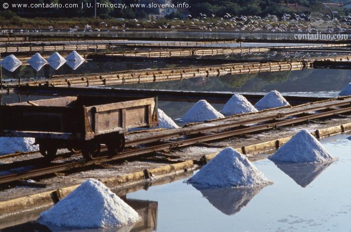 slowenien_Portoroz-salt pan.JPG