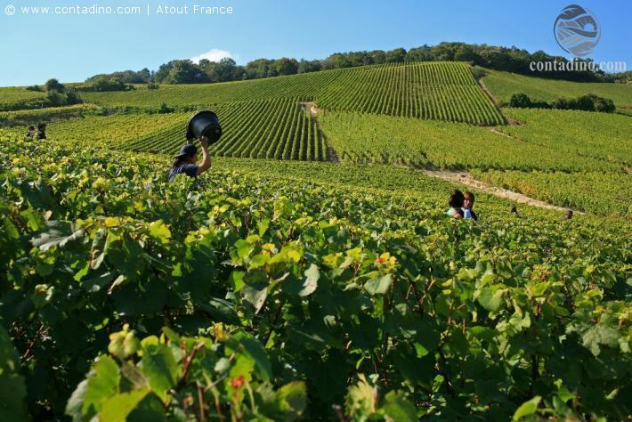 Impression Burgund