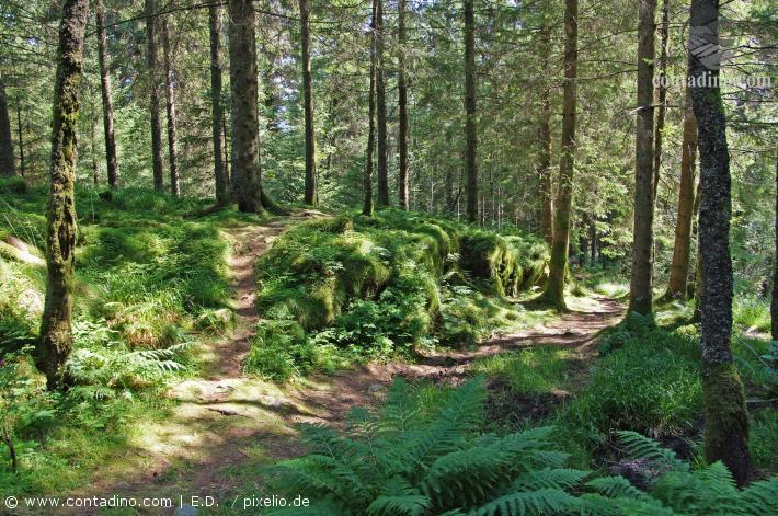 Norwegen_Wald.jpg