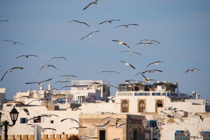 Marokko (8).jpg