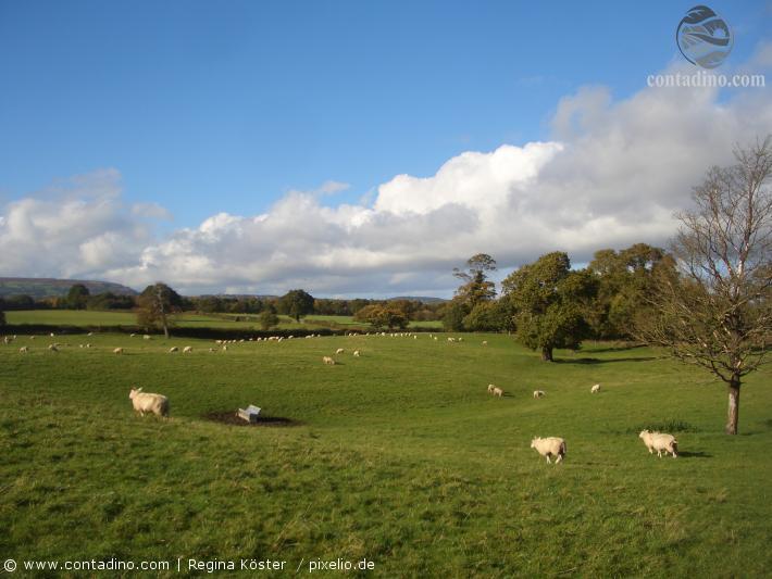 Wales (1).jpg